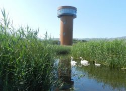 The Viewing Tower -5, Tralee Bay Wetlands