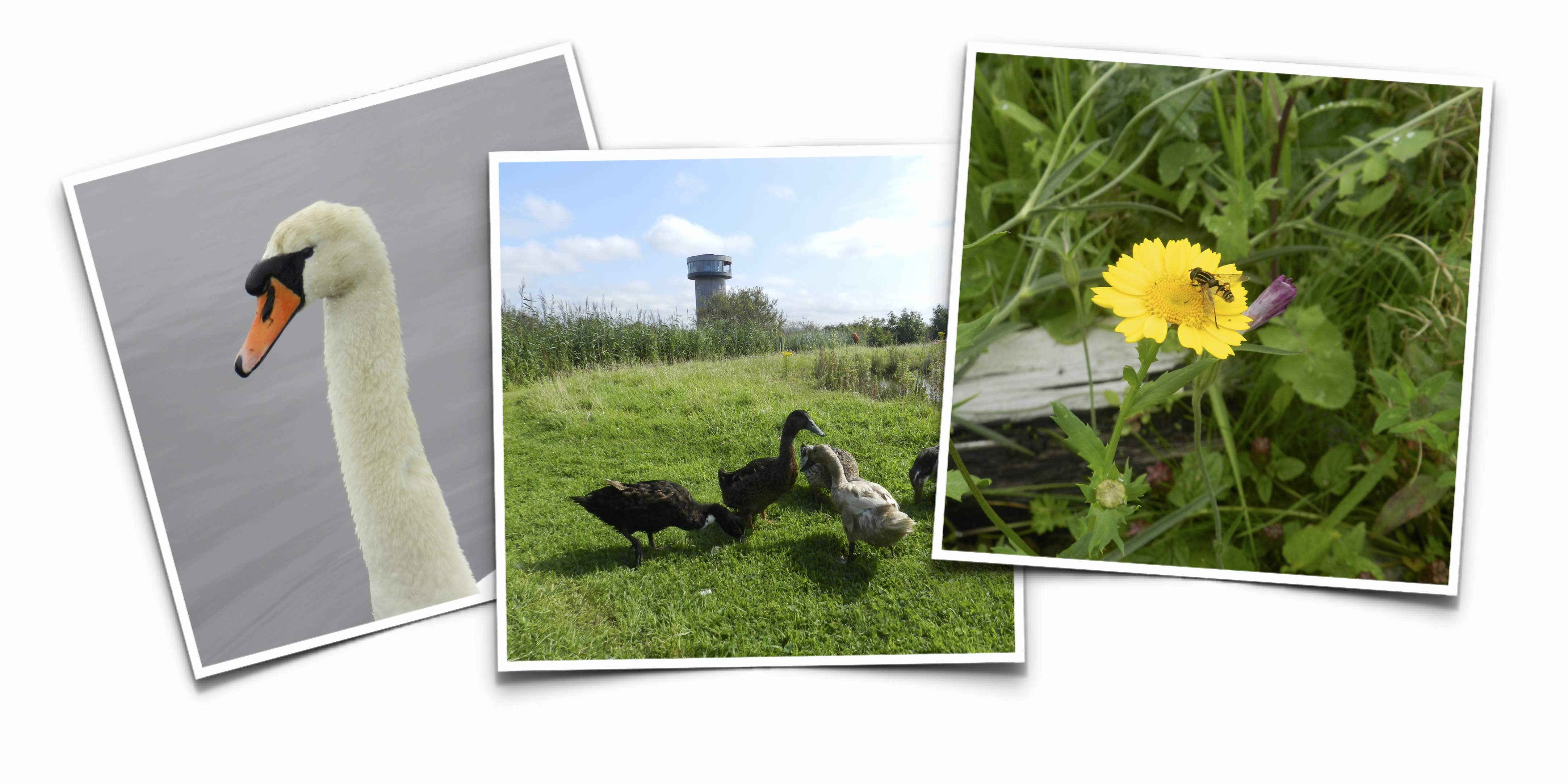 Tralee Bay Wetlands Collage1